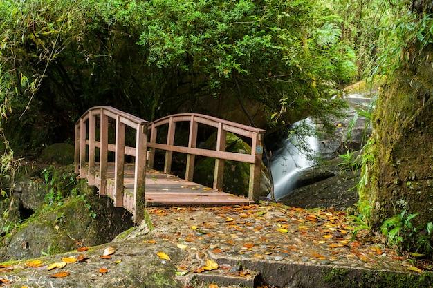 Kleine holzbrücke im regenwald mit wasserfall