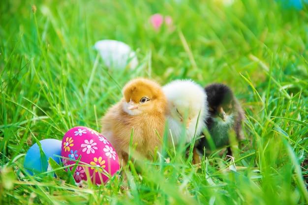 Kleine hühner im grünen gras. ostern. selektiver fokus