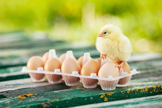 Kleine hühner und eier auf dem holztisch. grüner bsckground.