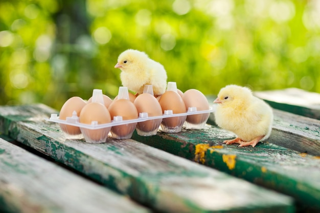 Kleine hühner und eier auf dem holztisch.