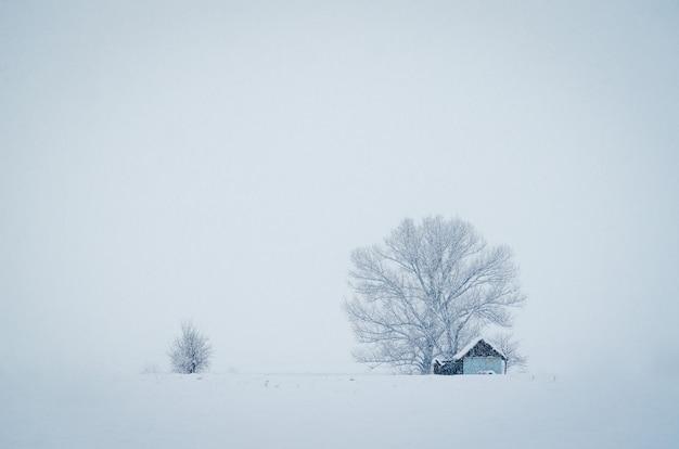 Kleine hütte vor dem großen baum, der an einem nebligen wintertag mit schnee bedeckt wird