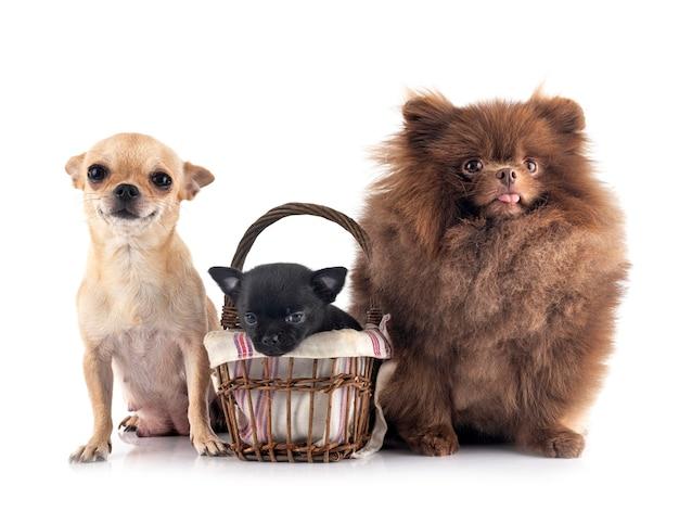 Kleine hunde