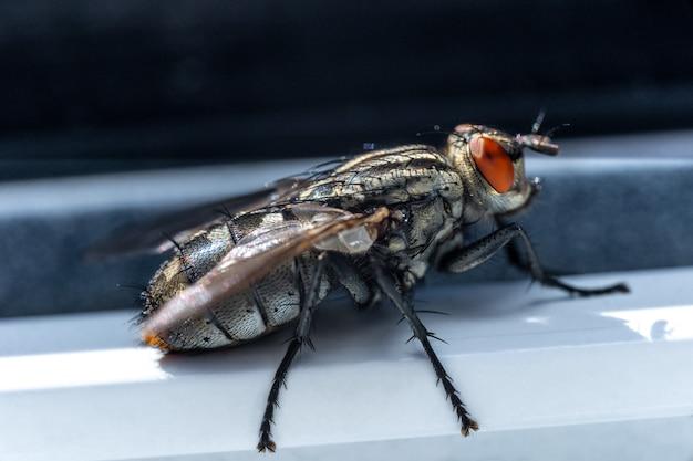 Kleine insekten in der makrofotografie. fliegen