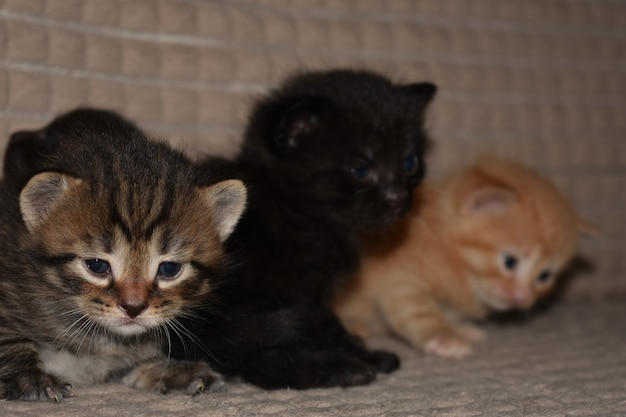 Kleine kätzchen spielen auf der couch