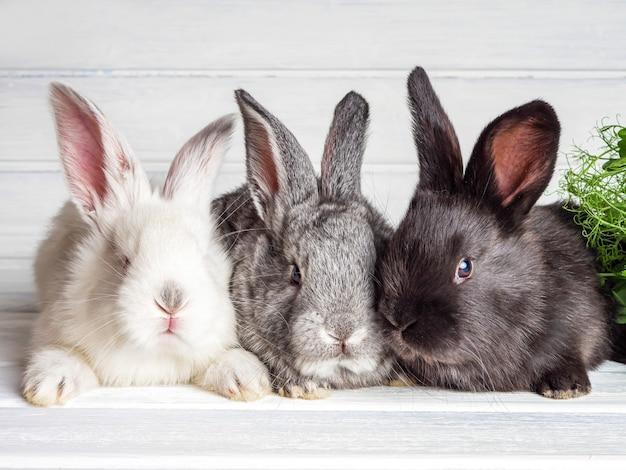 Kleine kaninchen auf einer hellen oberfläche. nahansicht.