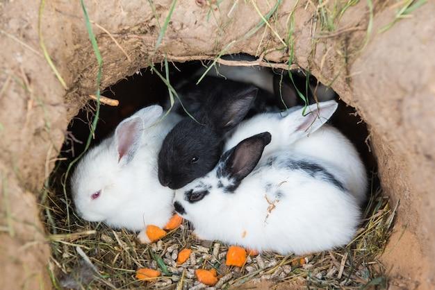 Kleine kaninchen sitzen in einem loch