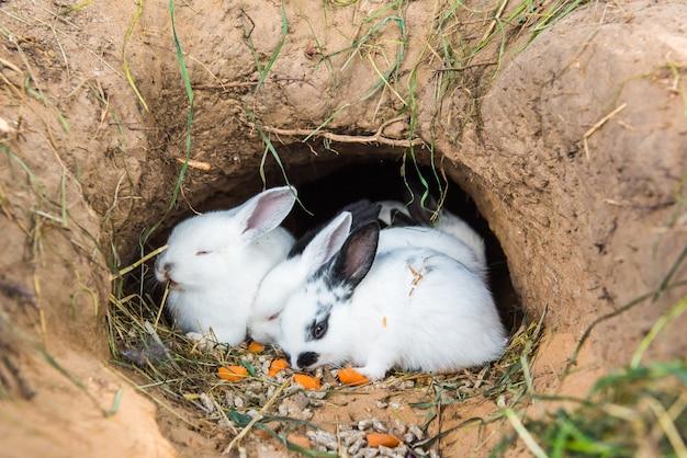 Kleine kaninchen sitzen und essen karotten in einem loch, einige schlafen