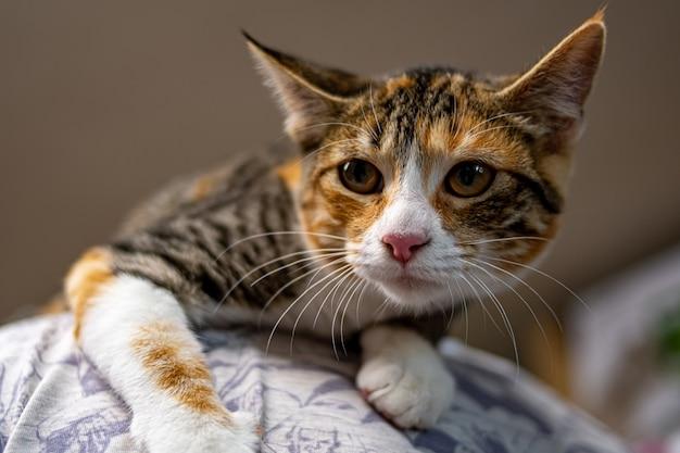 Kleine katze auf der schulter ihres besitzers