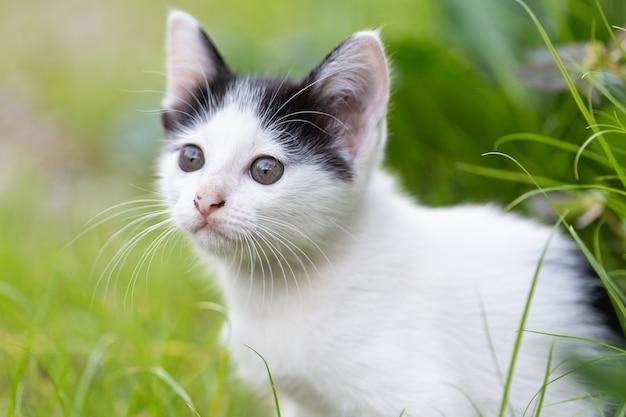 Kleine katze, die auf dem gras sitzt.