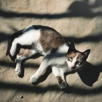 Kleine katze, die draußen konzept sich entspannt