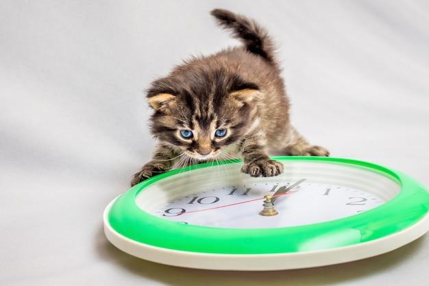 Kleine katze schaut auf die uhr. die zeit läuft schnell. es ist zeit zu abend zu essen. mittagspause. das neue jahr kommt. bald neues jahr
