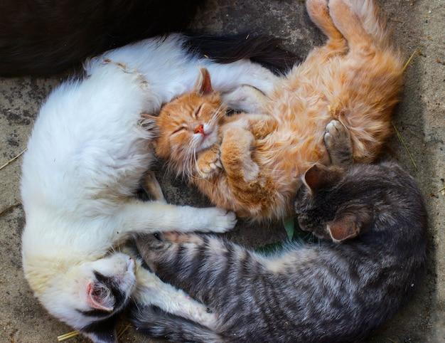 Kleine katzen schlafen hautnah