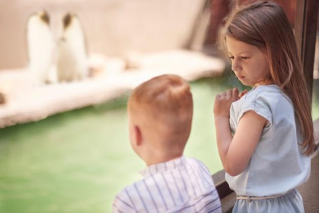 Kleine kinder, die auf süße pinguine schauen