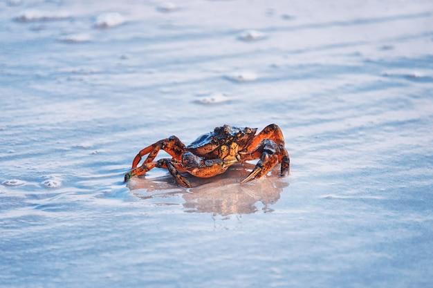 Kleine krabbe an einem sandstrand