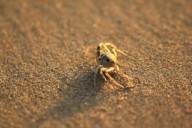 Kleine krabbe auf dem sand.