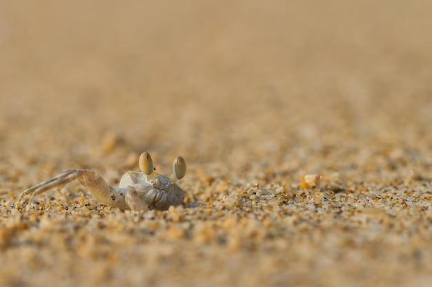 Kleine krabbe auf dem sand