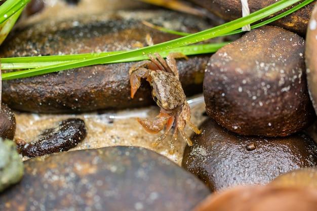 Kleine krabbe auf den felsen.