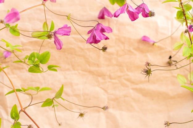 Kleine lila blüten auf papier