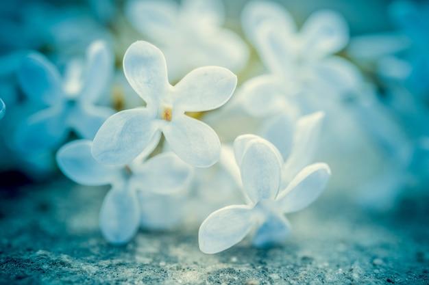 Kleine lila blume mit vier spitzen blütenblättern