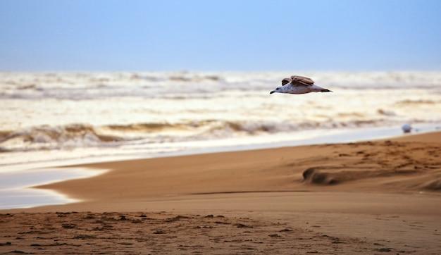 Kleine möwe am strand fliegen