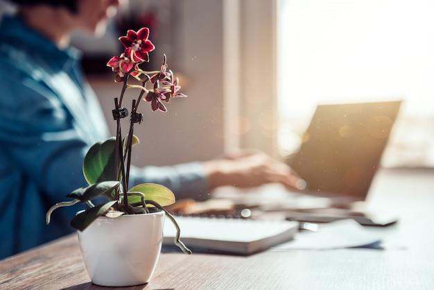 Kleine orchidee am schreibtisch
