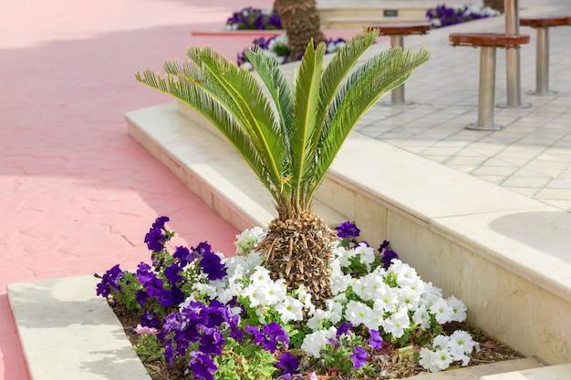 Kleine palmen auf grünem gras. grüner baum gepflegt im park, gepflegter rasen im sommer
