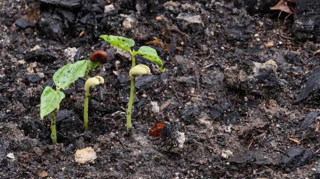Kleine pflanze, die aus dem boden in der natürlichen umgebung nach regen wächst