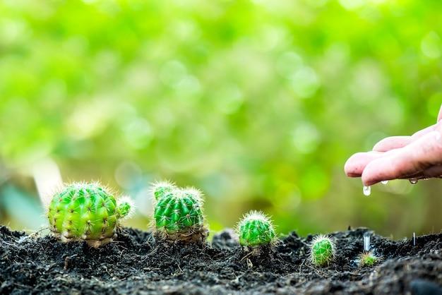 Kleine pflanze, die im garten wächst. frischer start in den tag. umwelt und neues transformationslebenskonzept retten