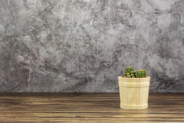 Kleine pflanze im holztopf. - sukkulenten oder kakteen auf dem schreibtisch im zimmer.