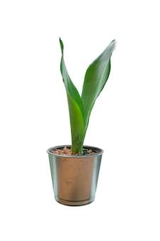 Kleine pflanze im topf