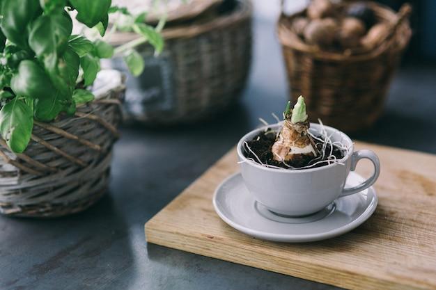 Kleine pflanze in einer tasse