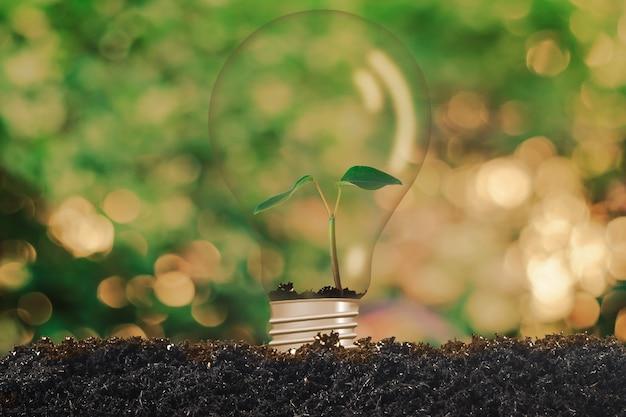 Kleine pflanze in glühbirne, erdumweltkonzept.