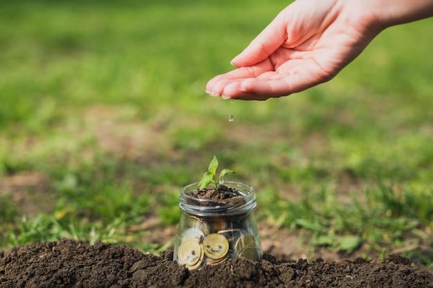 Kleine pflanze mit münzen