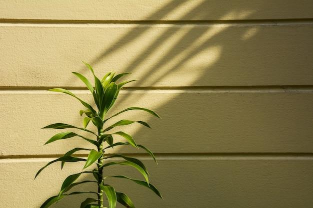 Kleine pflanze und ein schatten an der wand