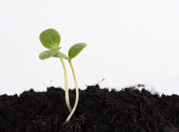 Kleine pflanze wächst aus dem boden, landwirtschaft