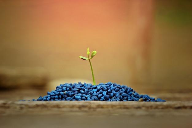 Kleine pflanze wächst, born-konzept