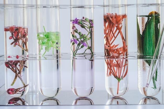 Kleine pflanzen im reagenzglas für biotechnologische medizinforschung.