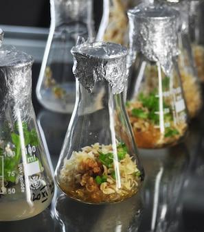 Kleine pflanzen in vitro gentechnik laborexperiment