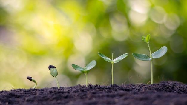 Kleine plantas, die im boden mit unscharfem vegetationshintergrund wachsen