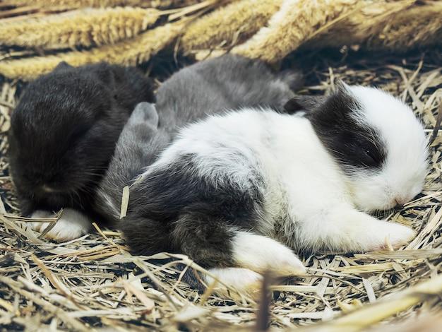 Kleine reizende kleine lokale thailändische kaninchen