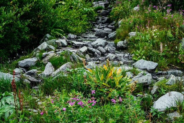 Kleine rosa blüten von weidenröschen wachsen in der nähe von quellwasser zwischen buntem gras. berg klarer wasserstrom zwischen steinen und reicher vegetation. blühender sally inmitten der hochlandflora. schönheit der alpinen natur.