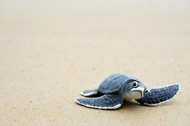 Kleine schildkröte am strand