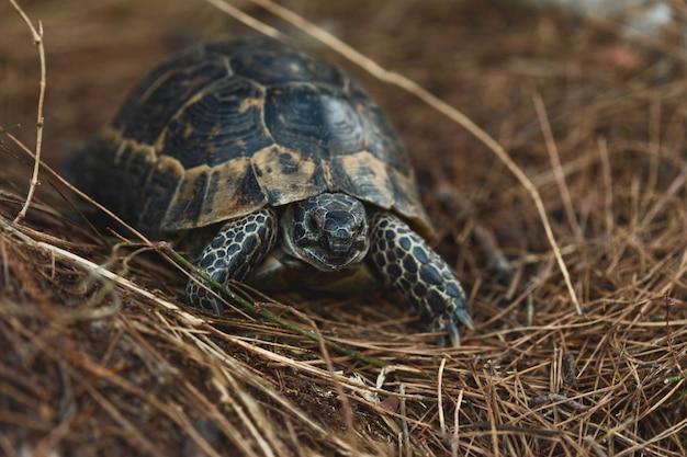 Kleine schildkröte in der natürlichen umwelt