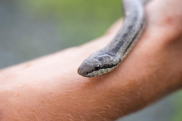 Kleine schlange zur hand