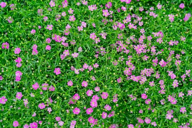 Kleine schöne blumen im sommer auf dem gebiet