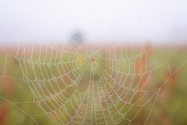 Kleine spinne im netz