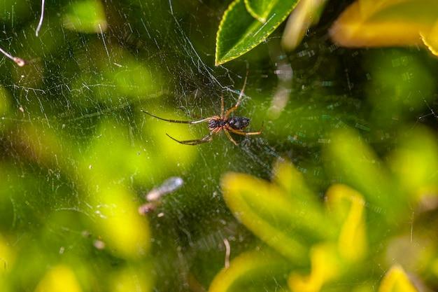 Kleine spinne in der natur, eingetaucht in laves im frühling, aufnahme mit makroobjektiv