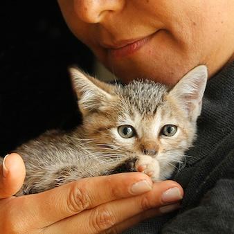 Kleine streunende katze im schutz