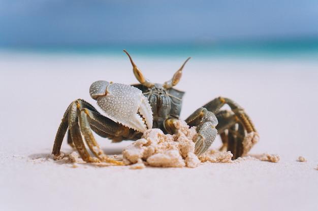 Kleine süße krabbe am strand am meer