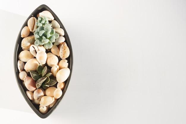 Kleine sukkulenten in einem keramiktopf